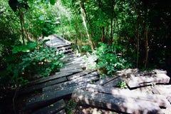 Energie des Waldes stockfotos