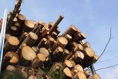 Energie-Holz durch die LKW-Eingabe Lizenzfreie Stockfotos