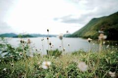 Energie von Blumengräsern stockfoto