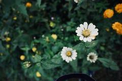 Energie von Blumengräsern stockfotos