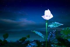 Energieconcept, installatie van de aarde de vriendschappelijke gloeilamp bij nacht Royalty-vrije Stock Foto's