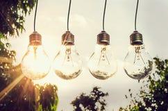 Energieenergie in der Natur und Glühlampe mit Sonnenuntergangkonzept wählen Stockfotos