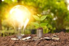 Energiesparende Glühlampe und Baum, die an auf Stapeln Münzen wächst Lizenzfreies Stockfoto