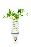 Energiesparende Lampe mit grünem Sämling Stockfotos