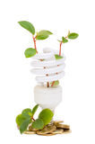 Energiesparende Lampe mit grünem Sämling Stockfoto