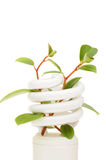 Energiesparende Lampe mit grünem Sämling auf Weiß Stockfotografie