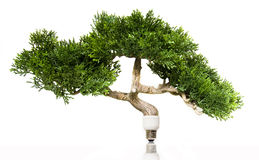 energigreen Royaltyfri Fotografi