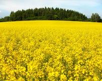 energii śródpolny zielonej rośliny rapeseed Zdjęcia Stock