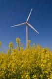 energiväxtwind Arkivbilder