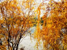Energodar. Victory park in autumn royalty free stock photography