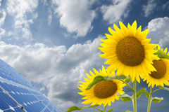 Energy. A view of sunflowers next to a solar panel or array in bright sunlight Royalty Free Stock Photos