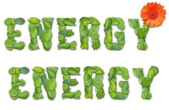 Energy. Word created from fresh green leaves Royalty Free Stock Image