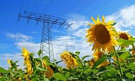 Energy. Power pole, sunflower and a blue sky Stock Image