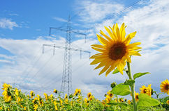 Energy. Power pole, sunflower and a blue sky Stock Photography