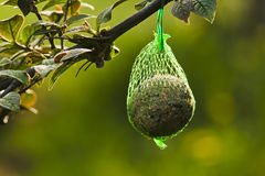 Energy Ball bird food. Energyball hanging on a tree branch in the garden royalty free stock image