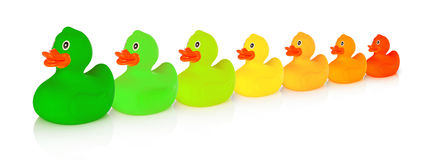 Energy class rubber ducks Royalty Free Stock Photos