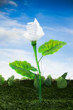 Energy concept, earth friendly light bulb plant Royalty Free Stock Images