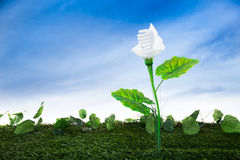 Energy concept, earth friendly light bulb plant Stock Image