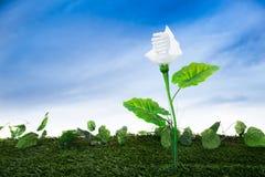 Energy concept, earth friendly light bulb plant Stock Image