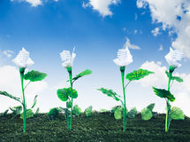 Energy concept, earth friendly light bulb plant Royalty Free Stock Image