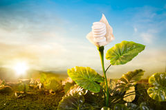 Energy concept, earth friendly light bulb plant Stock Photos