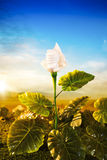 Energy concept, earth friendly light bulb plant Royalty Free Stock Photography