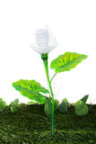 Energy concept, earth friendly light bulb plant, on white Royalty Free Stock Image