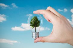 Energy efficiency concept. Abstract composition with tree in bulb. On nature background stock photography