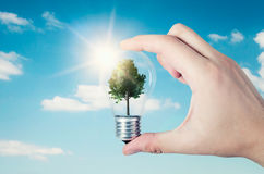 Energy efficiency concept. Abstract composition with tree in bulb. On nature background royalty free stock images
