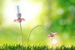 Energy efficiency lighting bulbs environmental conservation. With flowering bulbs in nature background. Horizontal composition. Front view Stock Photography