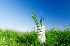 Energy-efficient bulb in green grass Royalty Free Stock Image