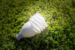 Energy efficient bulb Stock Photos