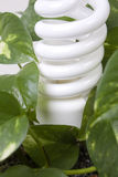 Energy efficient light in plant Stock Photos