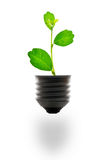 Energy saving. Small plant in light bulb for energy saving concept Stock Image