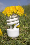 Energy saving bulb with dandelions stock photo
