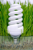 Energy-saving bulb in the grass Stock Photo