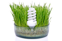 Energy-saving bulb in the grass Royalty Free Stock Photos