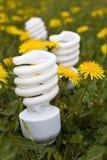 Energy saving bulbs on dandelion field 2 Royalty Free Stock Photos