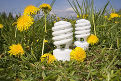 Energy saving bulbs on dandelion field 3 Royalty Free Stock Photography
