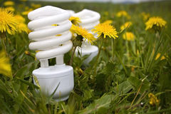 Energy Saving Bulbs On Dandelion Field Stock Image
