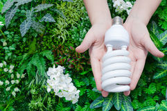 Energy saving concept, Woman hand holding light bulb on green nature background Stock Image