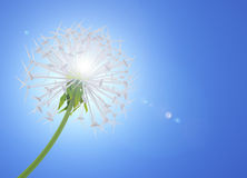 Energy Saving dandelion Stock Image