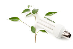 Energy-saving fluorescent lamp and a green twig Stock Photo