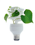 Energy saving lamp. With green seeding royalty free stock photo
