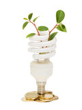 Energy saving lamp with green seedling on white Royalty Free Stock Photos