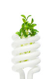 Energy saving lamp with seedling on white Royalty Free Stock Photos