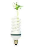 Energy saving lamp with seedling on white Royalty Free Stock Image