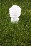 Energy Saving Light Bulb. In green grass Royalty Free Stock Photo