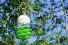 Energy saving light bulb on a branch of pine Stock Photography