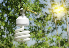 Energy saving light bulb on a branch of pine Royalty Free Stock Images